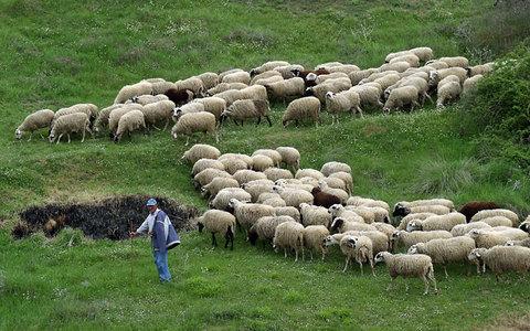 Γιατί διαμαρτύρονται οι κτηνοτρόφοι Γρεβενών και Ηπείρου