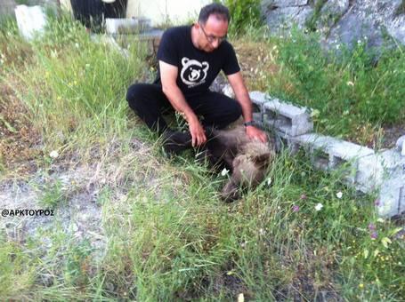 Δηλητηριασμένο αρκουδάκι βρέθηκε σε δασική περιοχή κοντά στην Καστοριά