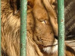 Αρκτούρος : Όχι στην επαναφορά των παραστάσεων και των θεαμάτων στους ζωολογικούς κήπους!