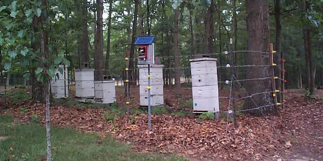Ενημέρωση μελισσοκόμων και κτηνοτρόφων για τη δράση  «Αγορά και εγκατάσταση ηλεκτροφόρου  περίφραξης»