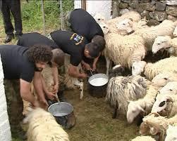 Ο Φορέας του Εθνικού Δρυμού Πίνδου με τους κτηνοτρόφους