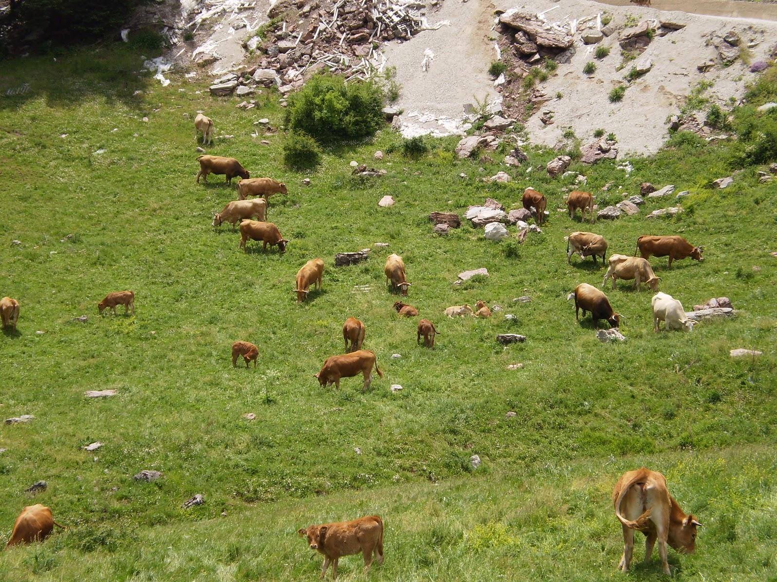 ΄΄Σοβαρά προβλήματα αντιμετωπίζουν οι κτηνοτρόφοι από την καταγραφή των επιλέξιμων βοσκήσιμων εκτάσεων ΄΄