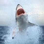 Στα αντισώματα των καρχαριών το όπλο για τον καρκίνο του μαστού