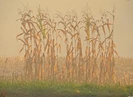 Αγρότες Γρεβενών: Πώς θα κάψουν τις καλαμιές