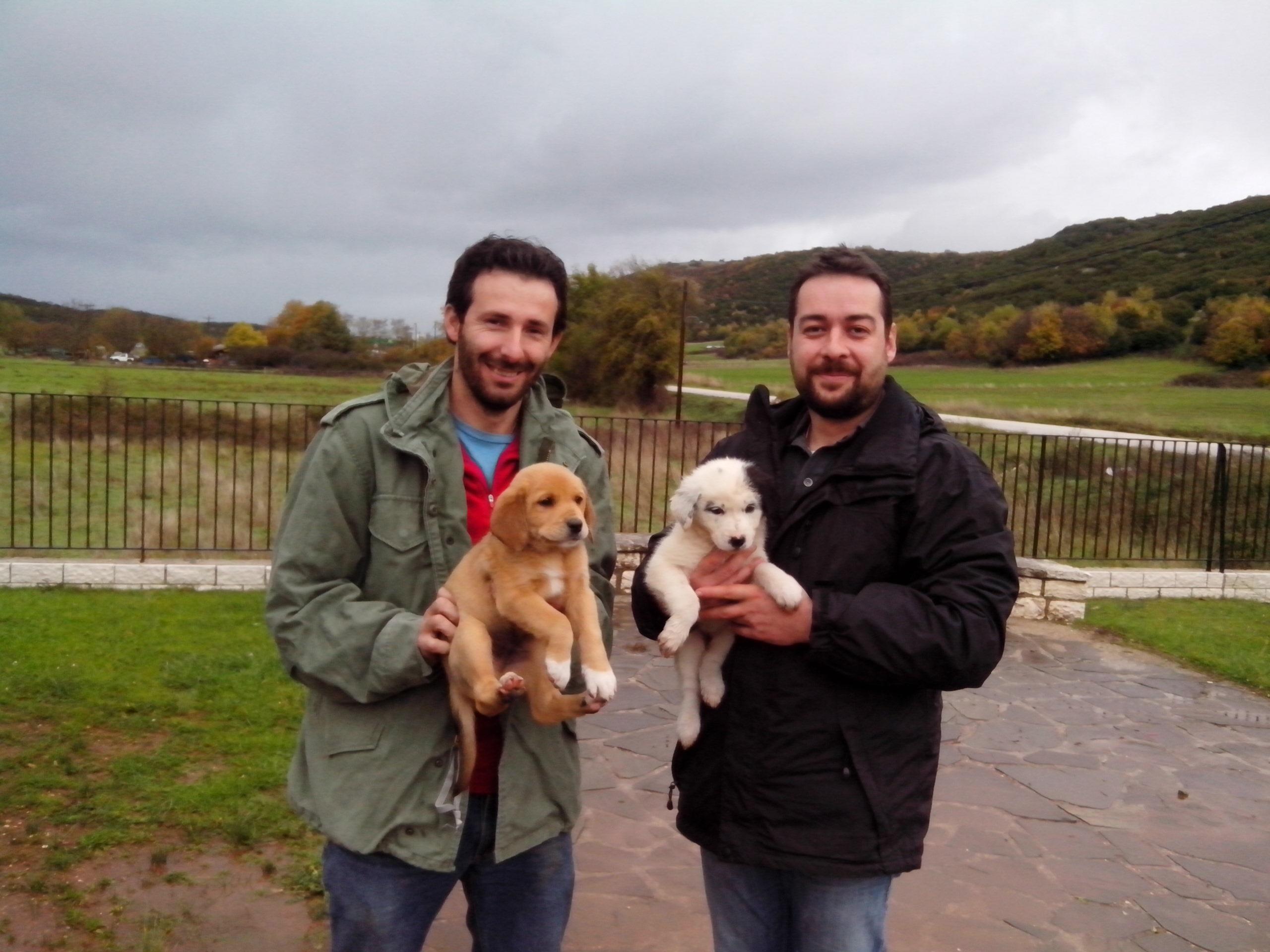 Κουτάβια ελληνικών ποιμενικών χαρίστηκαν σε κτηνοτρόφους του Εθνικού Πάρκου Βόρειας Πίνδου
