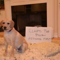 Έχετε άτακτο σκύλο; Βγάλτε φωτογραφία την σκανδαλιά του και κάντε τον διάσημο!