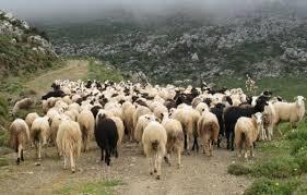 Συγκέντρωση αγροτών και κτηνοτρόφων της Δυτικής Μακεδονίας