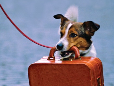 ΚΤΕΛ Ν.Γρεβενών: Τα Δρομολόγια στα οποία επιτρέπεται η μεταφορά μικρών κατοικίδιων ζώων