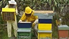 Γενική συνέλευση του Μελισσοκομικού συλλόγου Γρεβενών το Σάββατο 1 Φεβρουαρίου