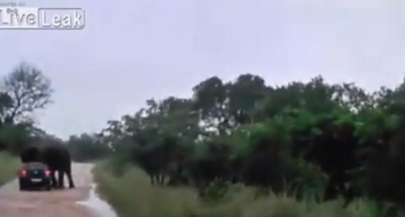 Ελέφαντας αναποδογυρίζει αυτοκίνητο με τουρίστες (video)
