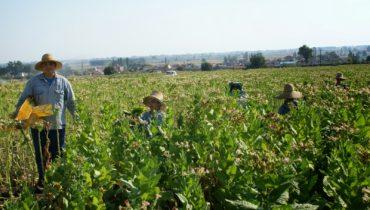 ΠΕ Γρεβενών: Αναρτήθηκαν οι καταστάσεις πληρωμής της δράσης 1.1. «Βιολογική Γεωργία» έτους 2015