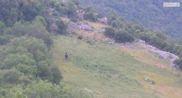 video~ Αρκούδα στο Σπήλαιο Γρεβενών
