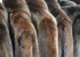Με επιχειρηματίες από την Καστοριά συναντήθηκε ο Δημήτρης Κούρκουλας – Συζήτησαν θέματα για την προώθηση της γούνας