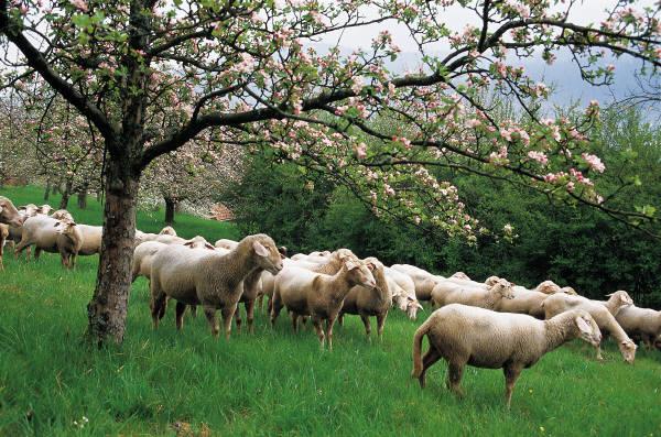 Διπλασιάζεται η προίκα της εξισωτικής  – Σε ενστάσεις καλούνται οι κτηνοτρόφοι