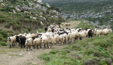 Γρεβενά: Σε ποια Δημ. Διαμερίσματα απαγορεύεται η μετακίνηση των κοπαδιών