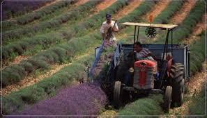 Δήμος Γρεβενών: Ημερίδα για τις εναλλακτικές καλλιέργειες