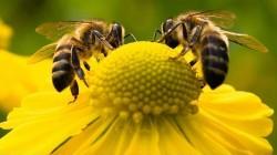 Ημερίδα για την  Μελισσοκομία – Κέντρο Τεχνολογικής Έρευνας ΤΕΙ Δυτικής  Μακεδονίας