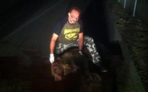 Καστοριά: Τροχαίο με θύμα αρκούδα στη ΓΕΟΚ (φωτογραφίες – βίντεο)