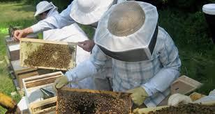 Ο Μελισσοκομικός Σύλλογος ΠΕ Κοζάνης καλεί τα μέλη του στο σεμινάριο μελισσοκομίας στις 27-28 και 29 Ιουλίου