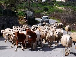 Ανακοίνωση για το διάστημα  παραμονής των μετακινούμενων κτηνοτρόφων