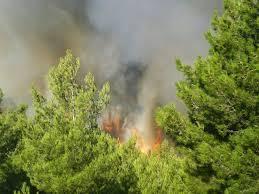 Δασική πυρκαγιά στα Πριόνια Γρεβενών