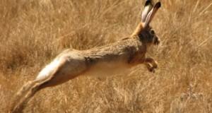 Κυνηγετικά σφηνάκια: Αρχίζει το κυνήγι του λαγού και του αγριόχοιρου. Τι λένε νέοι κυνηγοί των Γρεβενών –  Χιλιάδες… αγριόχοιροι καταστρέφουν την παραγωγή των αγροτών