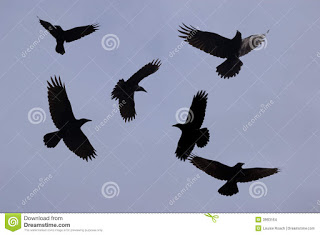 Μαύρα πουλιά… *Του Δημήτρη Ψευτογκά