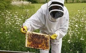 Αιτήσεις μελισσοκόμων της ΠΕ Γρεβενών για την Ενίσχυση της δράσης 4.1 « Αναλύσεις μελιού» μέχρι 31 Ιουλίου