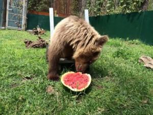 Το αρκουδάκι Ούσκο έχει πλέον δικό του ειδικό αμαξίδιο – Μια πρωτοβουλία του Αρκτούρου