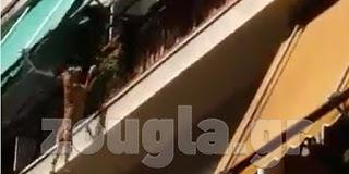 ΒΙΝΤΕΟ – ΣΟΚ! Πέταξε τον σκύλο του από τον 3ο όροφο (Βίντεο)