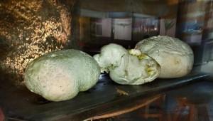 Μανιτάρι γίγας έξι κιλών βρέθηκε στο Δαφνερό Βοΐου!