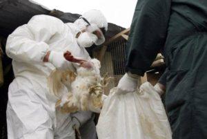 Αυξάνονται οι εστίες της νόσου της Γρίπης των πτηνών .Τι λέει η Δ/νση Κτηνιατρικής της Περιφέρειας Δυτ. Μακεδονίας