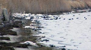 Κόκκινος συναγερμός για τη γρίπη των πτηνών στη Φλώρινα