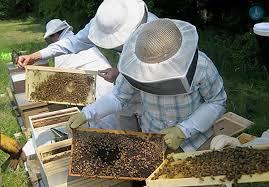 Αιτήσεις για τις Δράσεις 3.1 και 3.2 μελισσοκομικών προγραμμάτων 2017