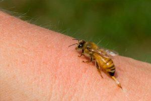 Ένας νεκρός και δύο άνδρες στο νοσοκομείο Γρεβενών από τσιμπήματα μελισσών
