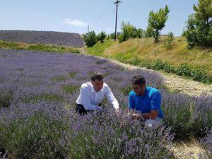 Ο αντιπεριφερειάρχης Ε. Σημανδράκος και ο περιφερειακός σύμβουλος Γ. Γιαννόπουλος βρέθηκαν σε καλλιέργειες λεβάντας.Μια πολλά υποσχόμενη καλλιέργεια