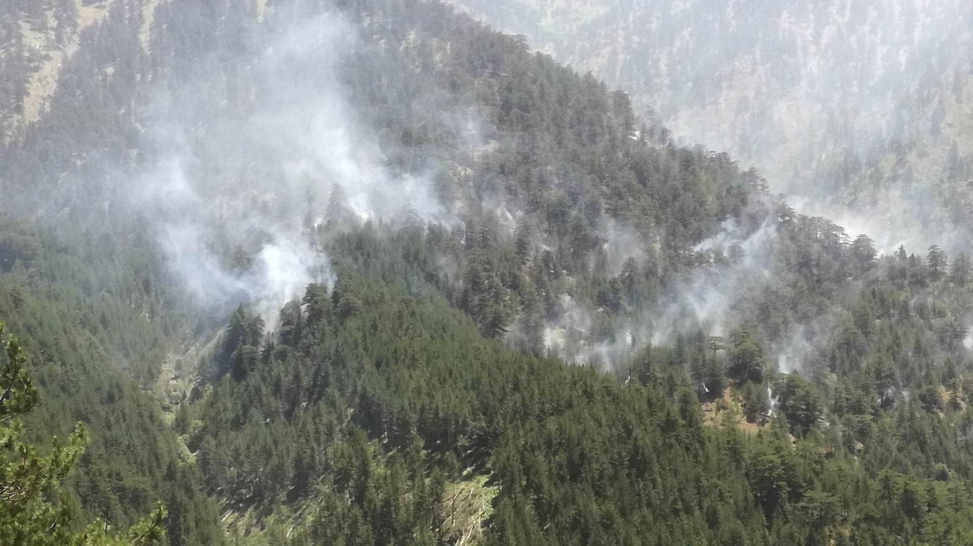 Συνεχίζεται η επιχείρηση κατάσβεσης σε δασική έκταση, κάτω απ την κορυφή της Γομάρας στην περιοχή της Σαμαρίνας- Τι λέει ο Αντιπεριφερειάρχης Γρεβενών (Βίντεο & Φωτογραφίες)