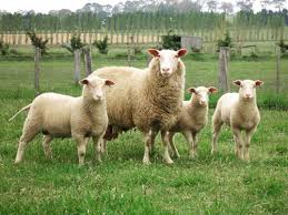 Αναλυτικές  καταστάσεις της 3ης πληρωμής της δράσης 1.2. «Βιολογική Κτηνοτροφία, εκκρεμότητες  έτους 2013»