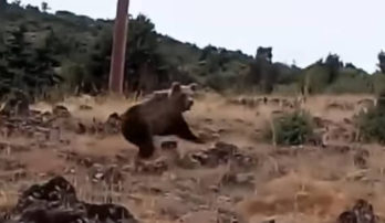 Καστοριά:Το βίντεο που κάνει το γύρο του διαδικτύου. Έβγαλε βόλτα τον σκύλο του και είδε τις αρκούδες μπροστά! Τι λέει ο ίδιος για το συμβάν