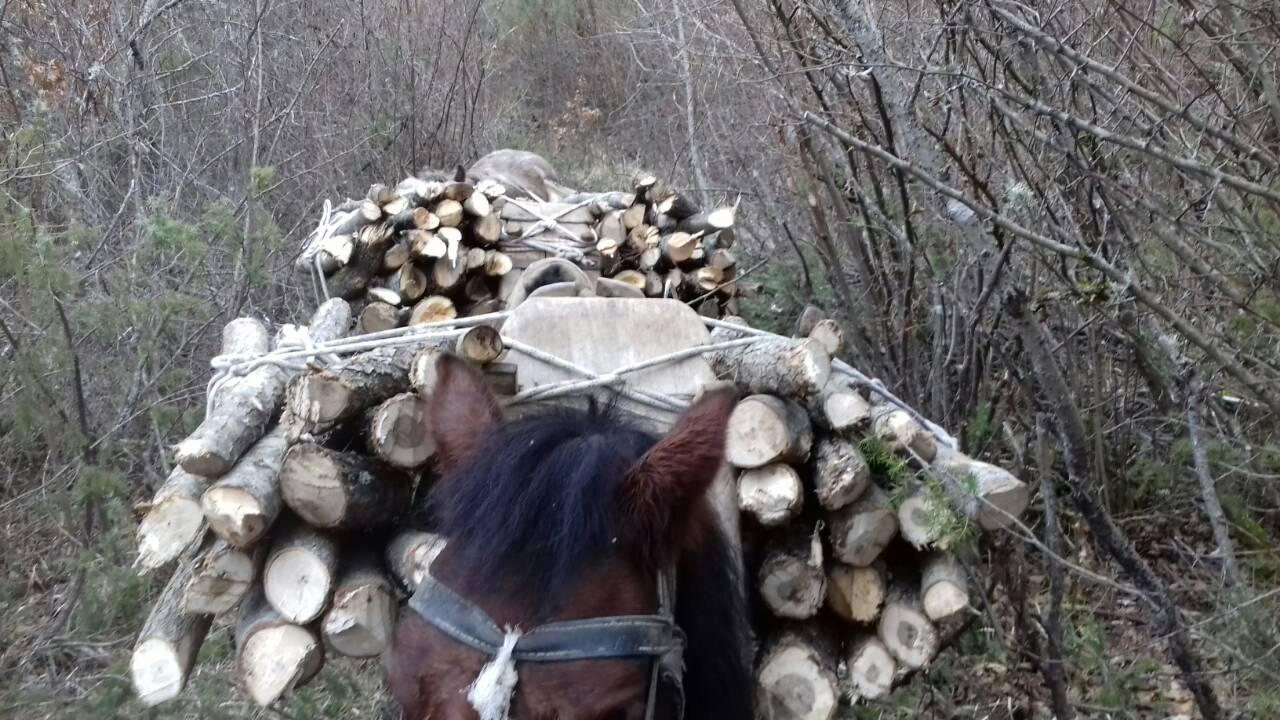 Σύλληψη δύο αλλοδαπών σε δασική περιοχή της Καστοριάς για παράνομη υλοτομία (Φωτογραφίες)