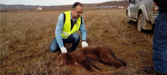 Καστοριά: Δηλητηρίασαν μικρό αρκουδάκι
