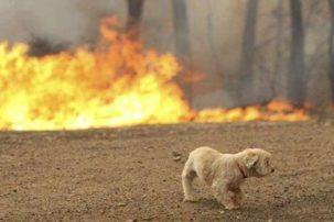 Πανελλαδική έκκληση: Βοηθήστε και σώστε τα ζώα από τις φλόγες