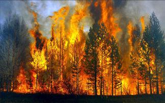 Εγώ φταίω για τις φωτιές, εγώ φταίω για τα θύματα!