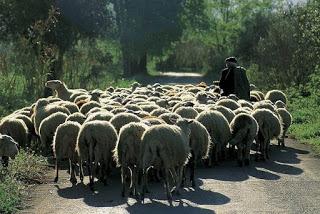 Κεραυνός σε κοπάδι προβάτων στην Κρυόβρυση Πτολεμαϊδας – Κινδύνεψε και ο κτηνοτρόφος