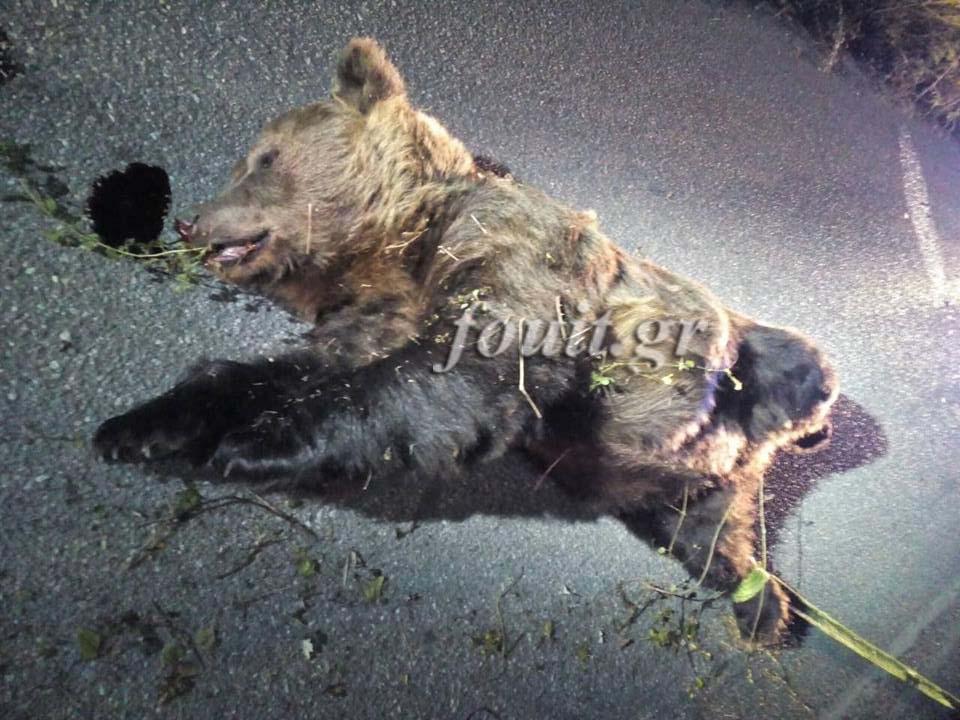 Καστοριά: Σοβαρό τροχαίο με τεράστια αρκούδα 400 κιλών – Στο νοσοκομείο ο οδηγός, νεκρό το ζώο (φωτογραφίες)