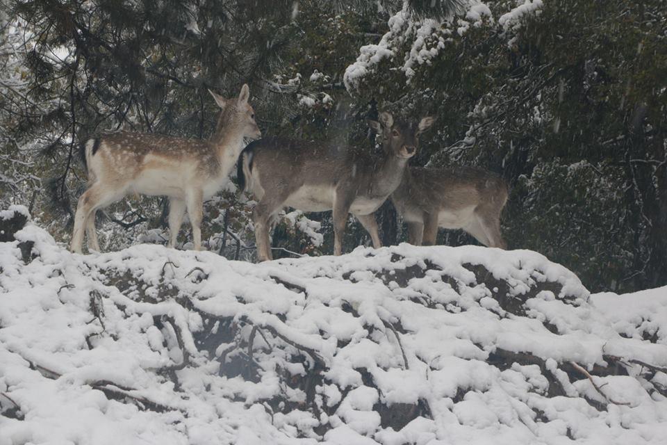 Φωτογραφίες από τα χιονισμένα χωριά των Γρεβενών