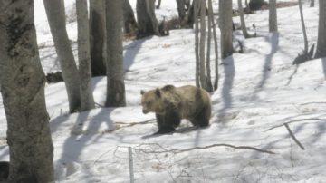 Κλειστό παραμένει από τις πρώτες μέρες του νέου έτους το Καταφύγιο της Αρκούδας στο Νυμφαίο