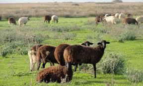Παράταση για τη ΄΄Διατήρηση απειλούμενων αυτόχθονων φυλών αγροτικών ζώων΄΄