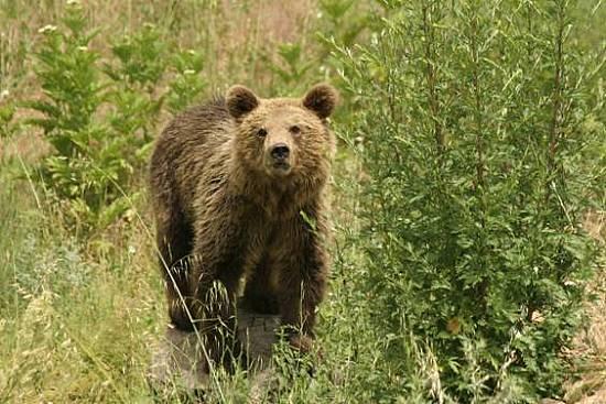 Η αρκούδα έκανε βόλτα… στην πόλη των Γρεβενών!!! (ΔΕΙΤΕ ΤΟ ΒΙΝΤΕΟ)