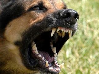 Καστοριά: Αδέσποτα σκυλιά κατασπάραξαν ηλικιωμένη γυναίκα – Η άτυχη γυναίκα νοσηλεύεται στο Νοσοκομείο